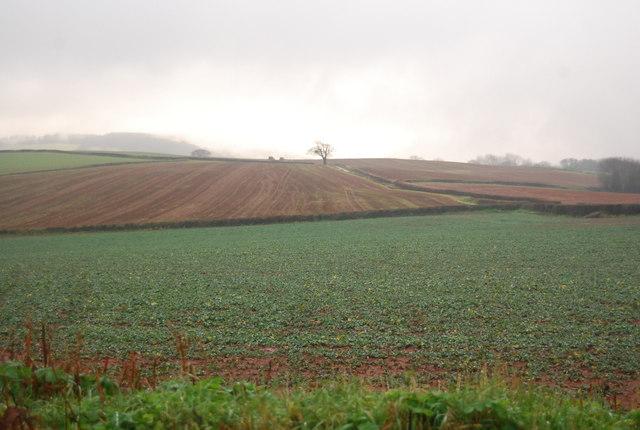 Fields north of Monksilver