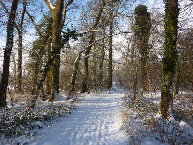Woodland walk in the snow