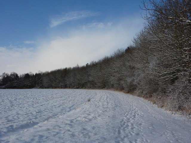 Snowy field and woodland edge