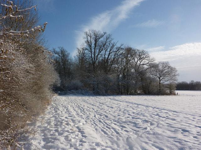 Winter walk following woodland edge