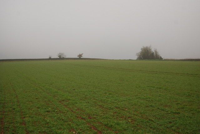 Field by the footpath to Capton