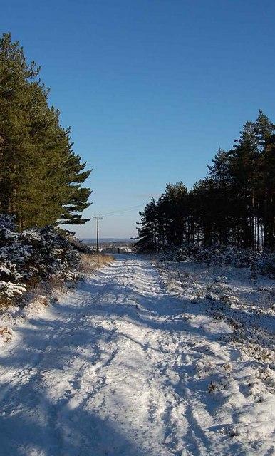 Forest track, Telegraph plantation