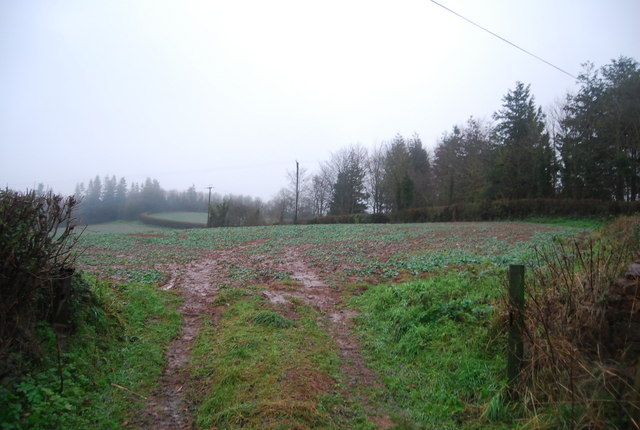 Field, Capton Farm