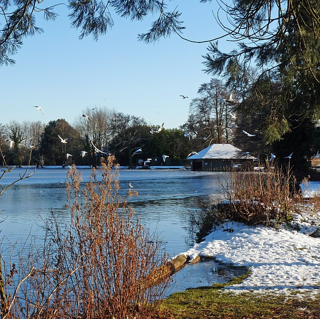 Winter view of the lake at Tredegar House Country Park