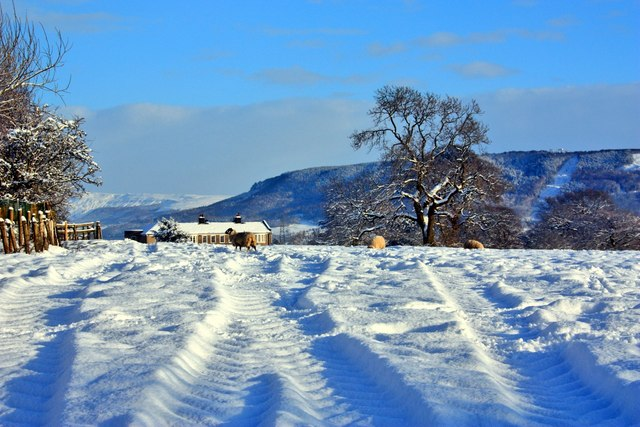 Field in Snow, East Harlsey