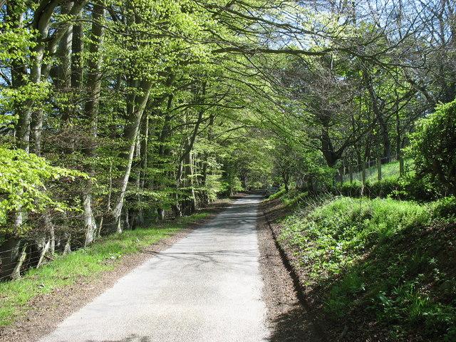 Lane beside Hazeldean Wood, Kelphope, looking south