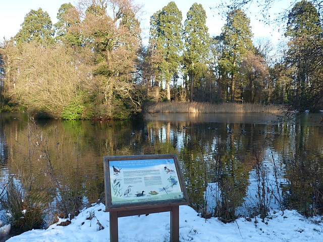 Lake and reed bed, Tredegar House Country Park