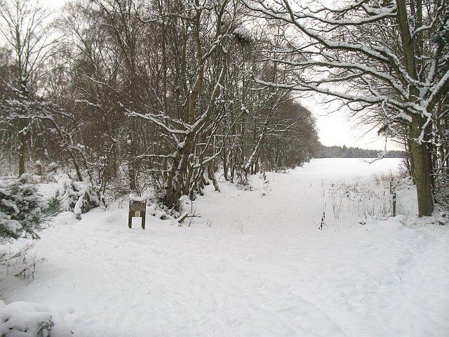 Butterdean Woods