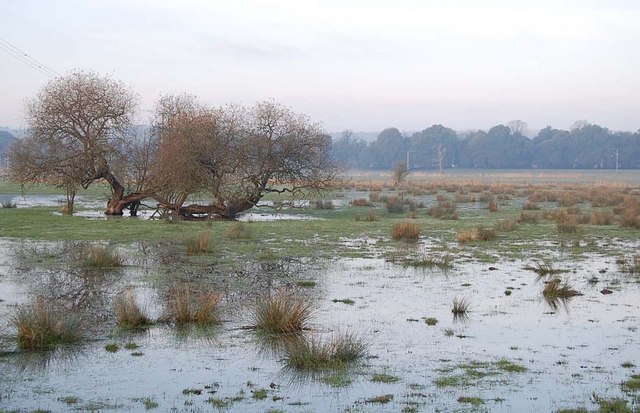 Willows in the flood, Ibsley, Hampshire