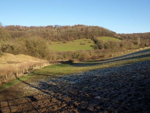 Millend Wood (2)