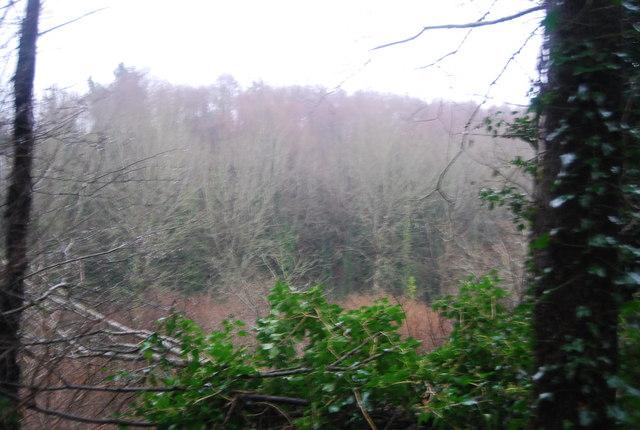 Woodland near Aller Farm
