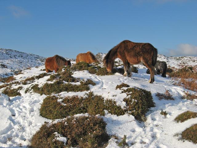 Hairy ponies 2