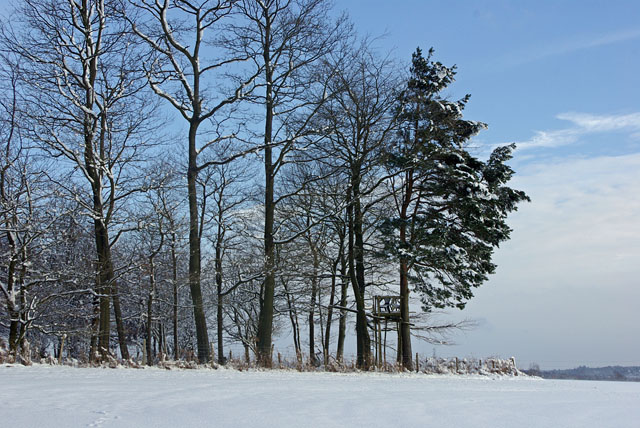 Deer seat, Bensonhill wood