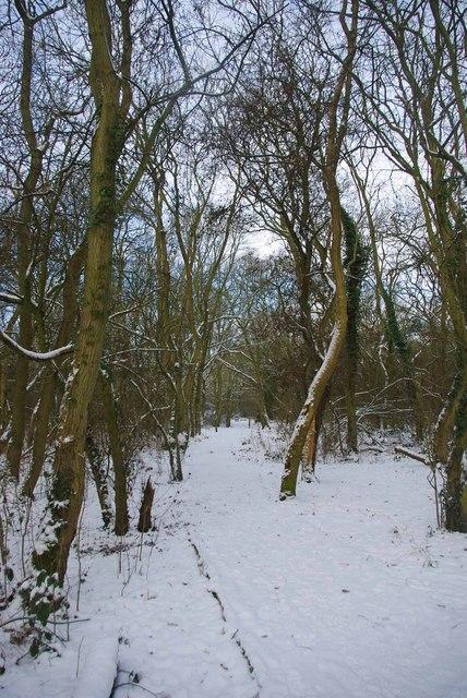 Path Through the Bushes