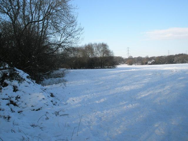 A snowy Bushy Lease (1)
