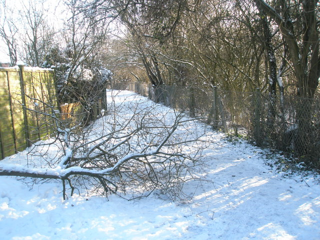 Fallen branches on the path from Bushy Lease to Park House Farm Way