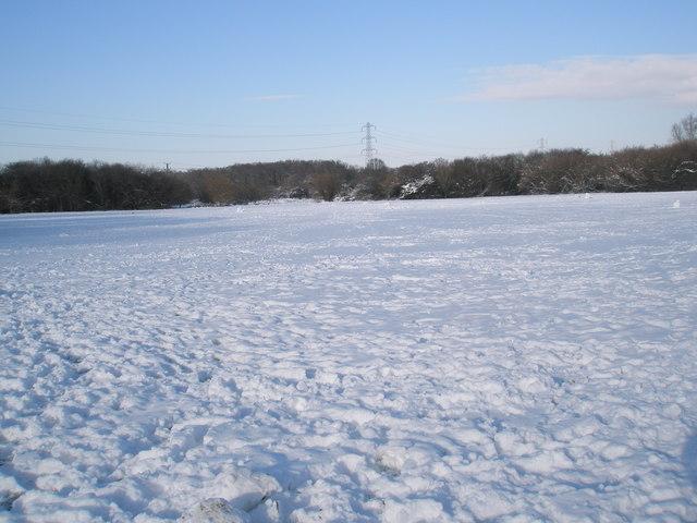 A snowy Bushy Lease (3)