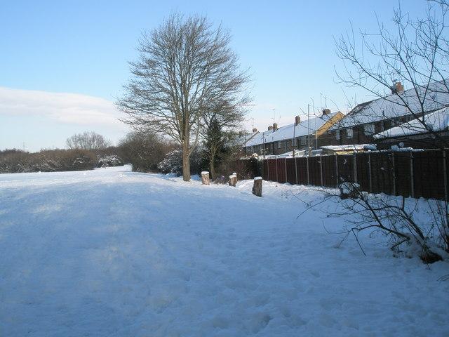 A snowy Bushy Lease (4)