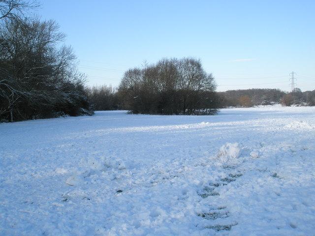 A snowy Bushy Lease (2)
