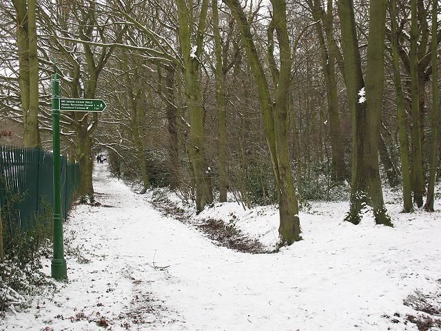 Winter in Elmstead Woods (2)