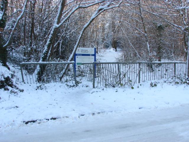 Footpath, Inkerman Woods