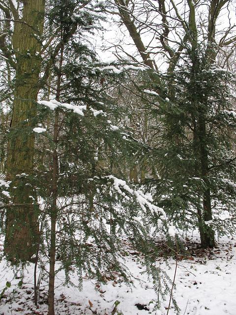 Winter in Elmstead Woods (3)