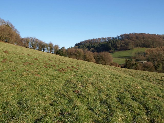 Hillside, Waterley Bottom
