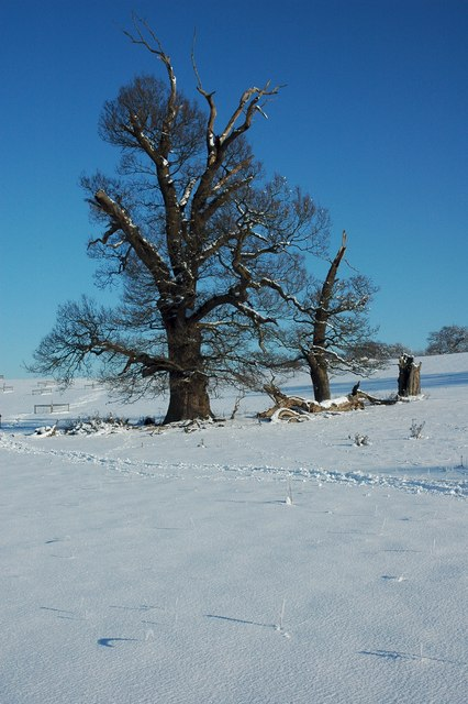 Trees in Croome Park