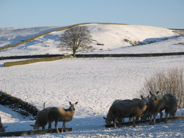 Snowy pastures near High Struthers (2)