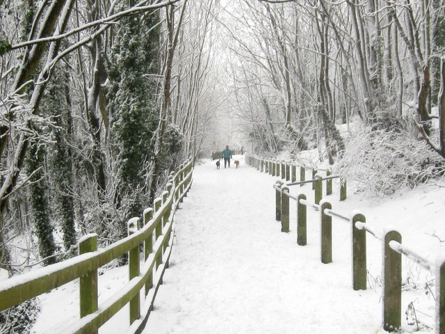 Hollingbury Woods in the snow