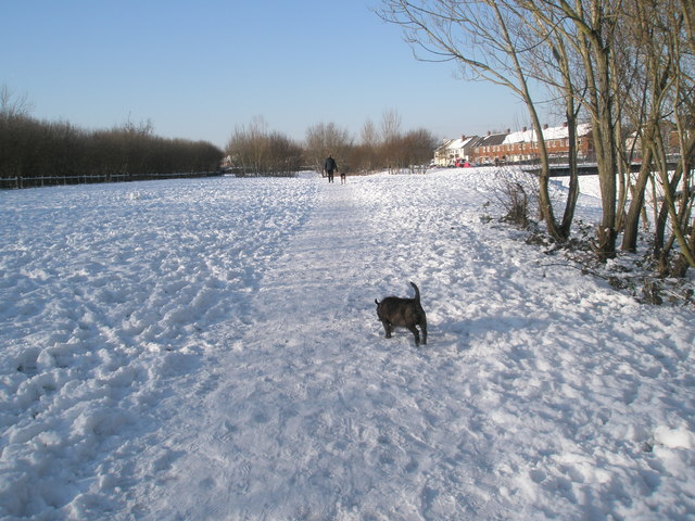 Canine capers in the snow at The Oaks