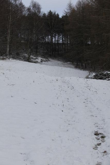 Footpath through Cum Hag Wood