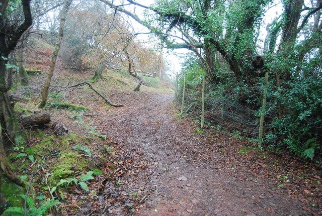 The Coleridge Way, Bicknoller Hill