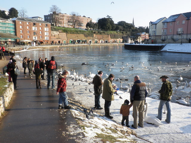 Feeding the swans, Exeter docks