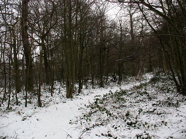 Winter in Elmstead Woods (4)