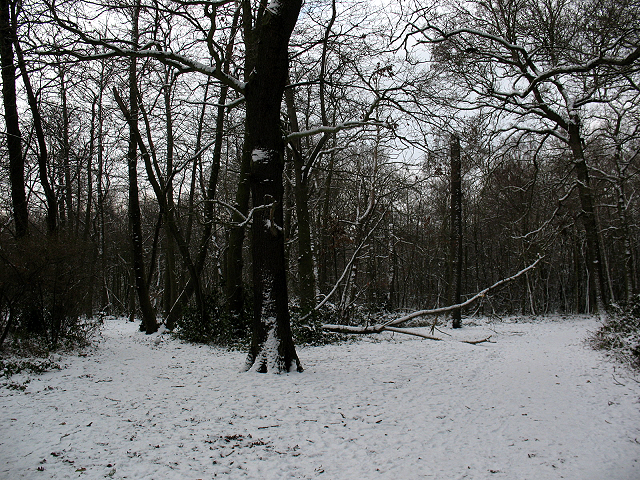 Winter in Elmstead Woods (5)