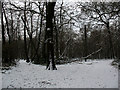 TQ4271 : Winter in Elmstead Woods (5) by Stephen Craven
