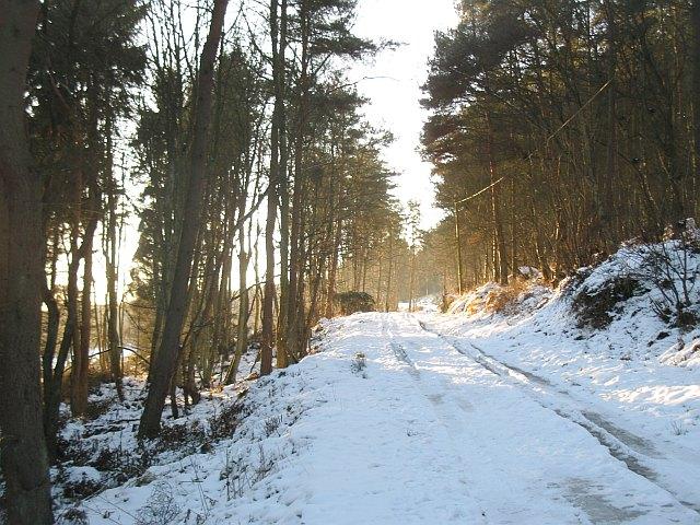 Road, Cullaloe Hills