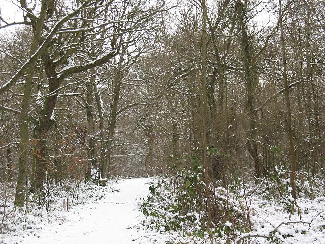 Winter in Elmstead Woods (6)