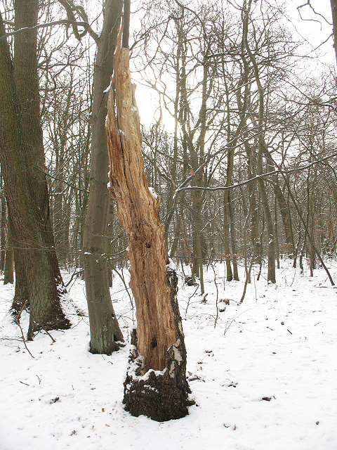 Winter in Elmstead Woods (7)