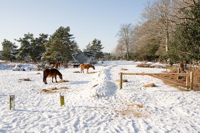 Fodder for the ponies at Cadmans Pool