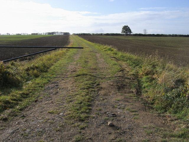 Farm track off Graveley Road