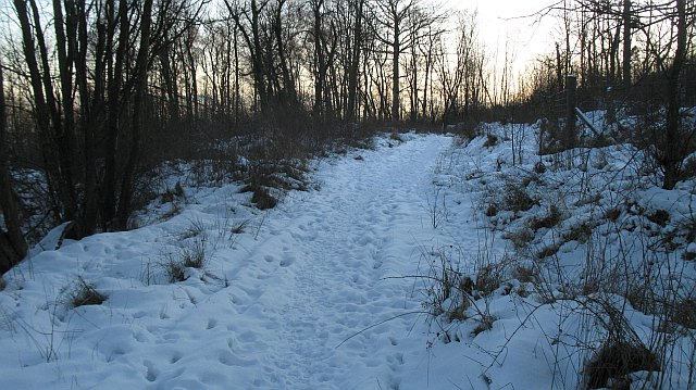 Path, Cullaloe Woods