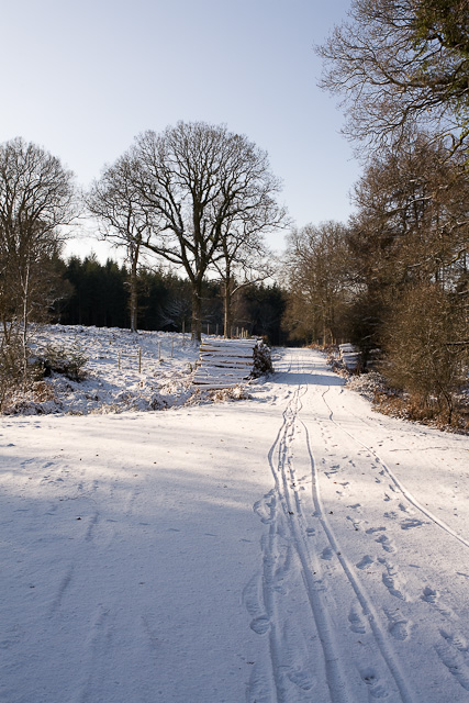 Track in Holly Hatch Inclosure
