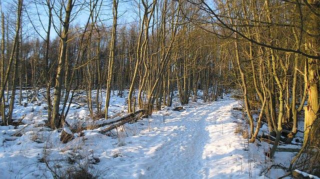 Cullaloe Woods