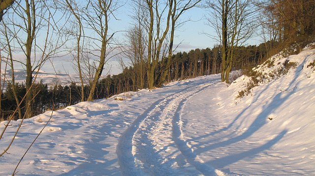 Track, Cullaloe Woods