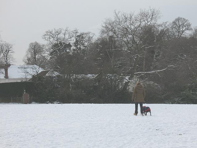 Dog walking on Walden Recreation Ground