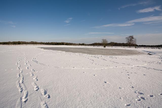 Green Pond frozen on Fritham Plain