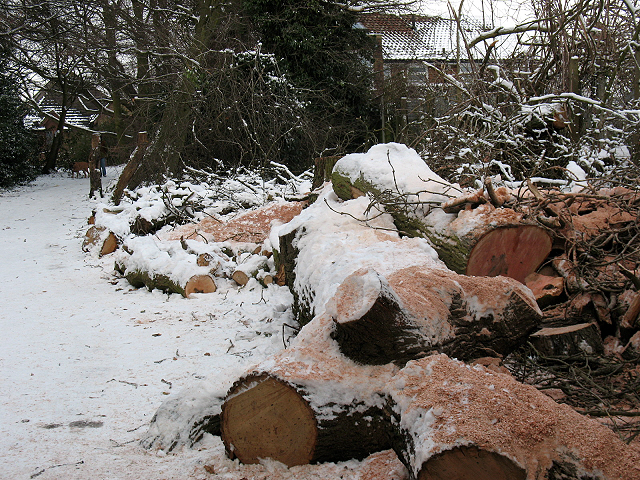 Log pile near Walden Recreation Ground