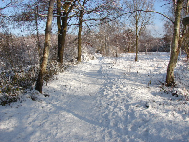 Footpath, Bisley Common